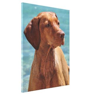 Magyar Vizsla Dog Canvas Prints