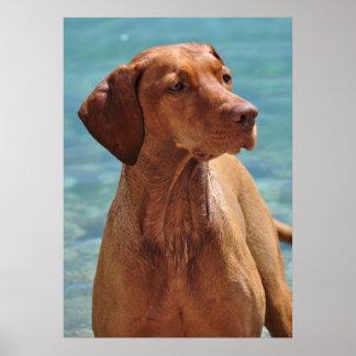 Magyar Vizsla Dog Poster