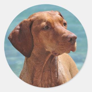 Magyar Vizsla Dog Round Sticker
