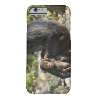 Mahale Mountains National Park, Tanzania Barely There iPhone 6 Case