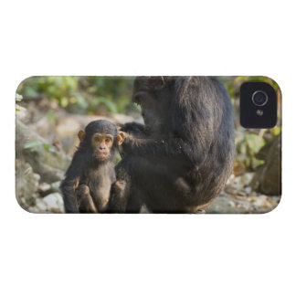 Mahale Mountains National Park, Tanzania iPhone 4 Case-Mate Case