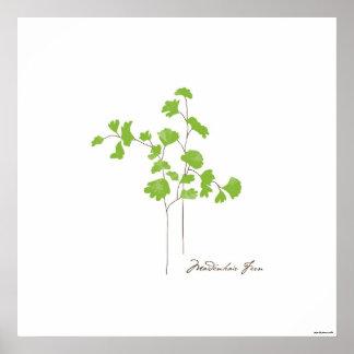 Maidenhair Fern Illustration | Botanic Poster