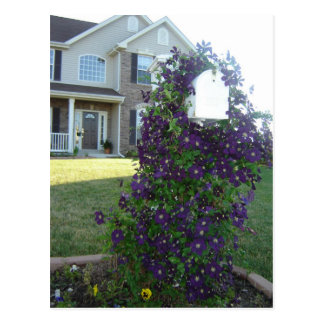 Mailbox and Clematis Postcard