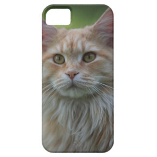 Main coon cat barely there iPhone 5 case