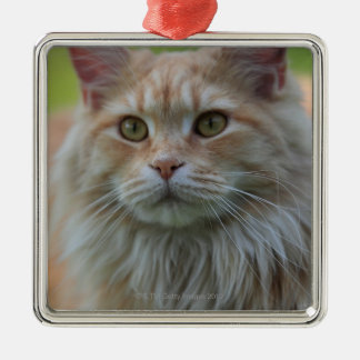Main coon cat christmas ornament