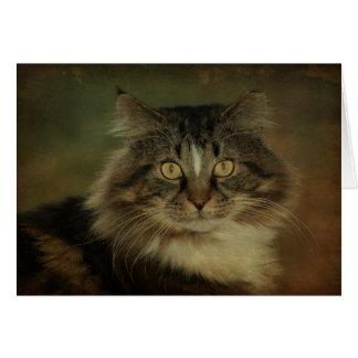 Main Coon Cat Notecard Cards