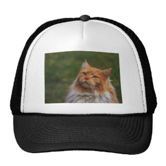 MainCoon Katze Mesh Hat