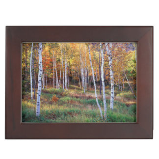Maine, Acadia National Park, Autumn Memory Boxes