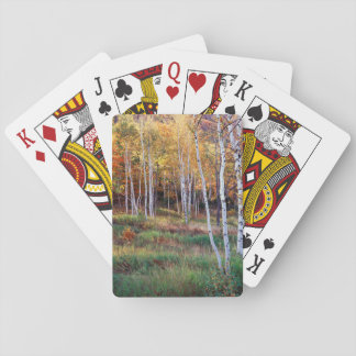 Maine, Acadia National Park, Autumn Playing Cards