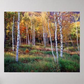 Maine, Acadia National Park, Autumn Poster