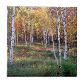 Maine, Acadia National Park, Autumn Tile