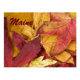 Maine Autumn Leaves Postcard