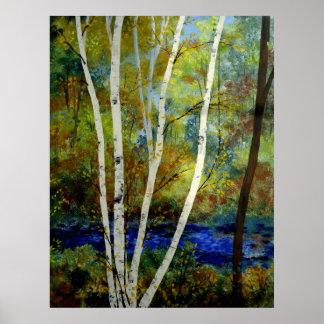 Maine Birch Stream Poster