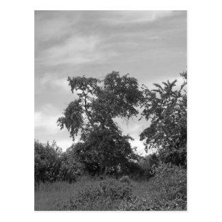 Maine_Black+White_138 Postcard