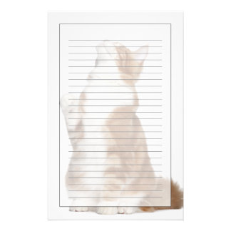 Maine Coon (6 months old) sitting and looking up Customised Stationery