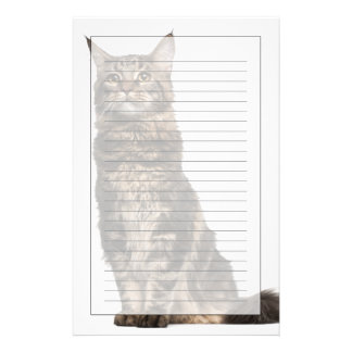 Maine Coon (8 months old) Stationery