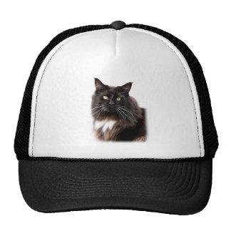 Maine Coon Cat 9Y825D-036 Hats