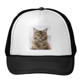 Maine Coon Cat 9Y825D-053 Hat