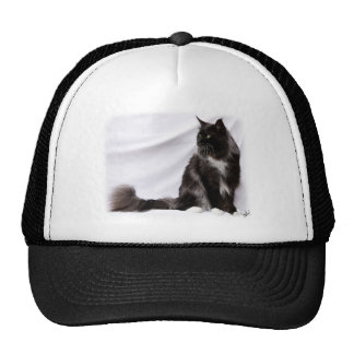 Maine Coon Cat 9Y825D-087 Hat