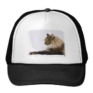 Maine Coon Cat 9Y825D-103 Hats