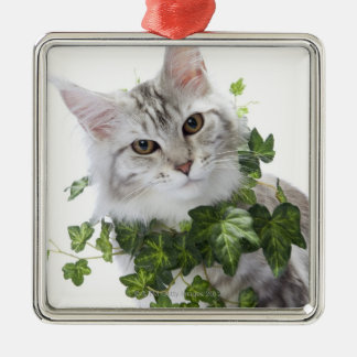 Maine Coon cat and ornament of ivy