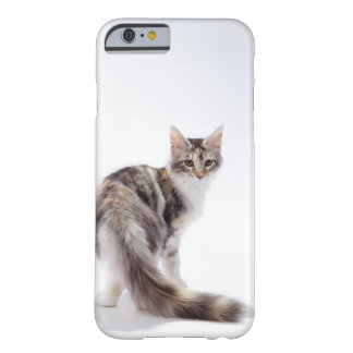 Maine Coon cat Barely There iPhone 6 Case