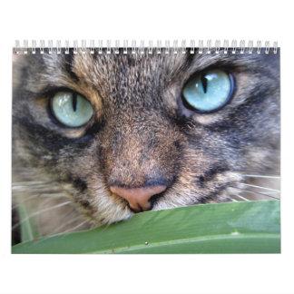 Maine Coon Cat Calendars