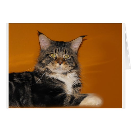 Maine Coon Cat Greeting Cards