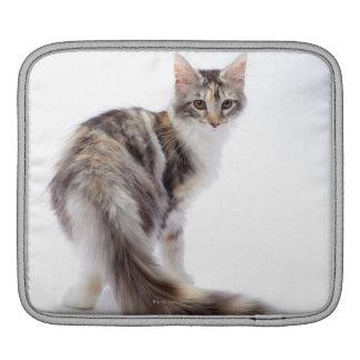 Maine Coon cat iPad Sleeve