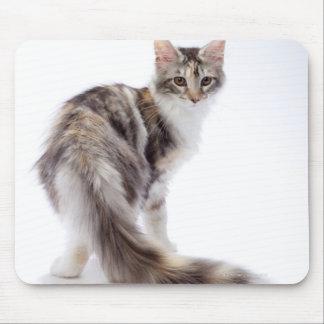 Maine Coon cat Mouse Mat