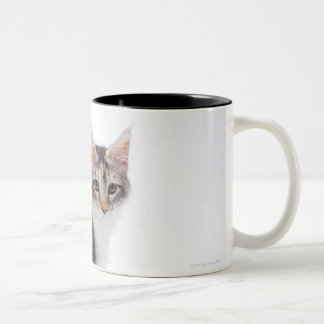 Maine Coon cat Two-Tone Coffee Mug