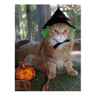 Maine Coon Cat Witch Postcard