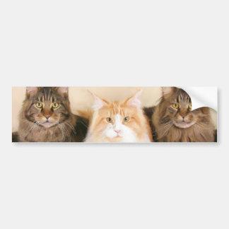 Maine coon Cats bumper sticker