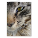 Maine Coon Cat's Eye Greeting Card