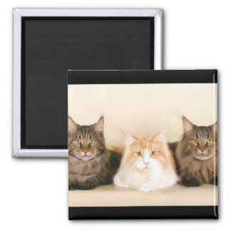 Maine coon Cats Magnet