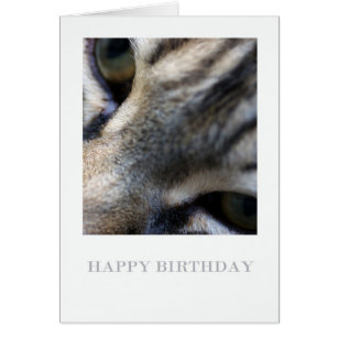 Maine coon cat birthday cards invitations zazzle maine coon close up photography birthday card bookmarktalkfo Image collections