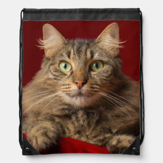 Maine Coon for Christmas with collector Drawstring Bag