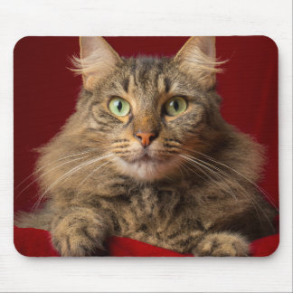 Maine Coon for Christmas with collector Mouse Pad