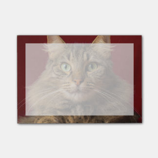 Maine Coon for Christmas with collector Post-it Notes