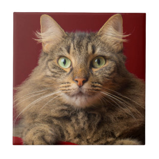 Maine Coon for Christmas with collector Small Square Tile