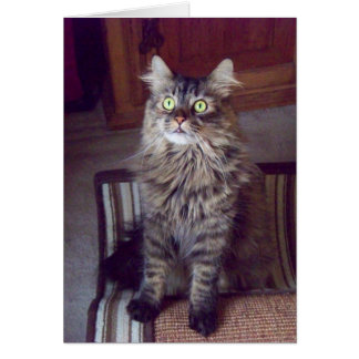 Maine coon Greetings (blank) Note Card