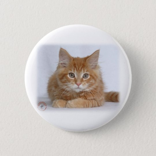 Maine Coon Kitten 9Y226D-373a 6 Cm Round Badge