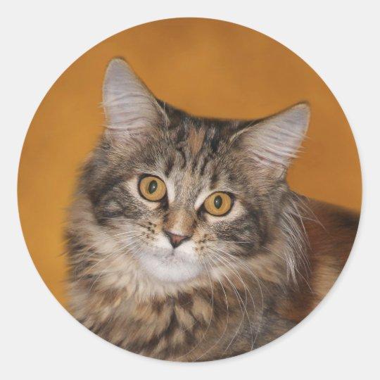 Maine Coon kitten face Classic Round Sticker