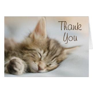 Maine Coon Kitten Sleeping Card