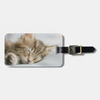 Maine Coon Kitten Sleeping Luggage Tag