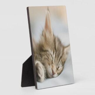 Maine Coon Kitten Sleeping Plaque