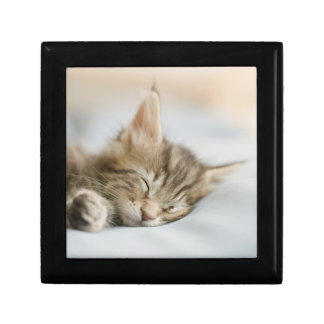 Maine Coon Kitten Sleeping Small Square Gift Box