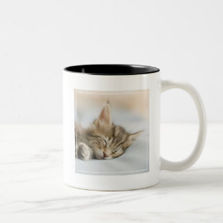 Maine Coon Kitten Sleeping Two-Tone Coffee Mug