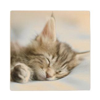 Maine Coon Kitten Sleeping Wood Coaster