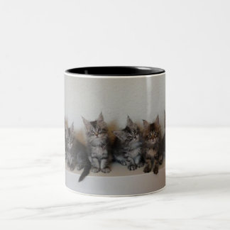 Maine Coon kittens Mug